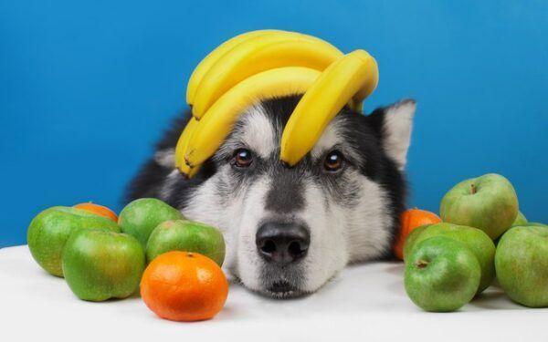 Descubra as Frutas Que Podem ou Não Ser Dadas aos Cachorros